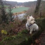 Mein Hund Knut in der wunderschönen Natur, 45 Min zu Fuß vom Hotel an der Lottersteighütte