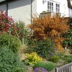 Riot of colour in the garden!