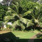 Foto de Old Wailuku Inn at Ulupono