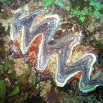 Diving at Rocktail Bay - close to Memela Lodge