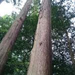 相当な樹齢の木々が!広い神社で、たっぷり森林浴できます!
