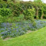 The Bluebells, in the gardens.