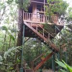Toucan Tree House