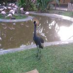 Foto de Selwo Lodge Hotel