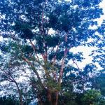 While jogging around the nearby areas, we came across several old and interesting trees
