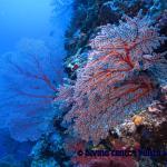 Diving Center Punta Stilo super attrezzato e Partenone Resort un Paradiso
