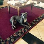 Crew the hotel dog