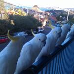 Friendly visitors on the upastair veranda