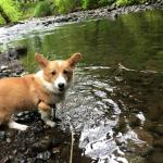 Our 6 months old Corgi was enjoying the waterfall :)