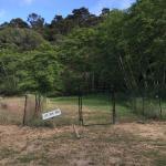 Fenced dog run