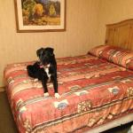 Puppy's first hotel room