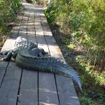 Photo of Jean Lafitte National Historical Park and Preserve