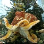 Mull Aquarium