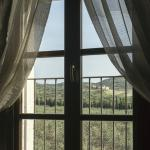 View of olive grove from our room