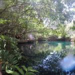 Cenote Beautiful