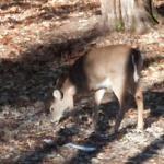 Foto de Roaring River State Park