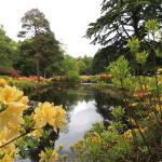 Stody Lodge Gardens