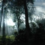 Photo de Plantation Trails by Tata Coffee, Coorg