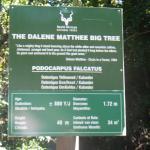 Sign at the Yellowwood Tree