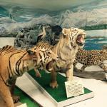 Tsuyama Nature & Mystery Museum
