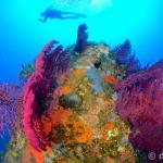 gorgonie short dive