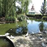 Feeding the birds, City Park
