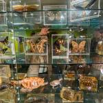 Just a few of the amazing exotic tropical insects on display in the Explore Nature Gallery