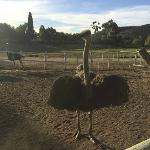 Posing Ostrich after riding one!!