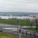 いちご園と桜