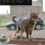 Любопытный голодный котик
