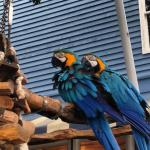 Parrots at the Inn