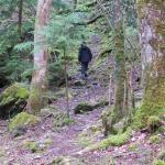 New precipice walk