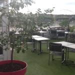 De très beau citronniers sur la terrasse