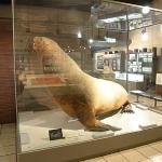 Hakodate City Northern Pacific Fishery's Document Museum Foto