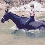 swimming with the horses was the highlight