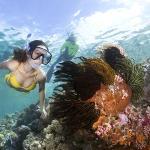 Snorkeling on Wakatobi's House Reef