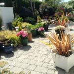 O'Driscoll B&B Garden area