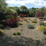 O'Driscoll's B&B Garden