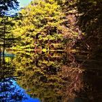 Foto de Ocala National Forest