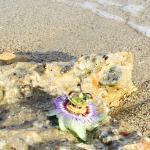 Plakia Beach Foto