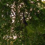 Photo de Cabinas Caribe Luna