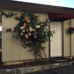 Photo of Cherry Tree Inn