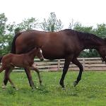 Mare and 6 day old baby - what's not to love??