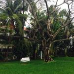 Lawn area of resort