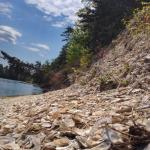 Shell Midden on West Bank of Damariscotta River
