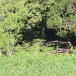 Foto de Rangerwood Nature Castle