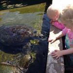 Reefworld Aquarium and Shark Swim