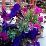 Foto de Silmog Garden
