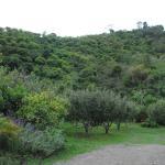 Photo of Cabinas las Manzanas