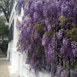 Charleston Beauty